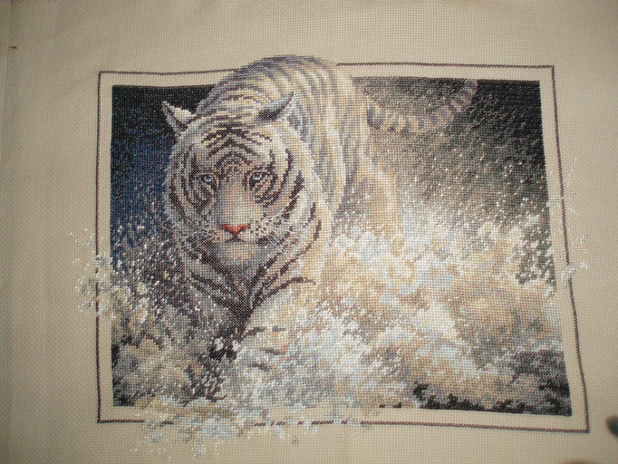 Tigre - ©dr