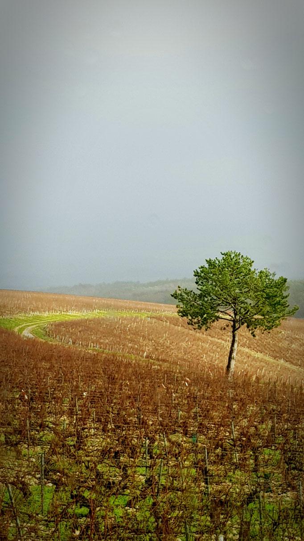 Suspensions fantastiques Domaine vitivole Brocard, Creation et réalisations Hervé Arnoul: Hiver.
