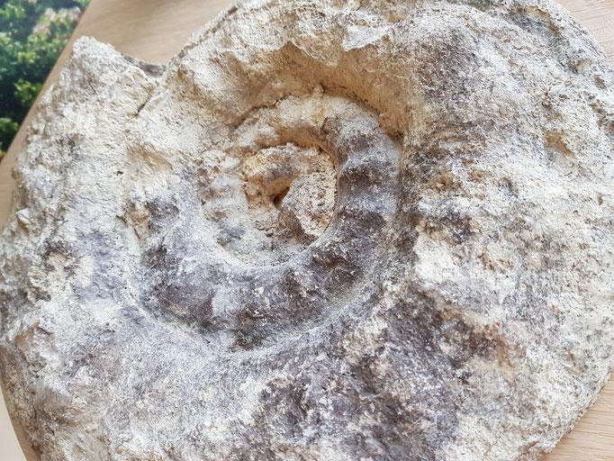 Suspensions fantastiques Domaine vitivole Brocard, Creation et réalisations Hervé Arnoul: Ammonite.