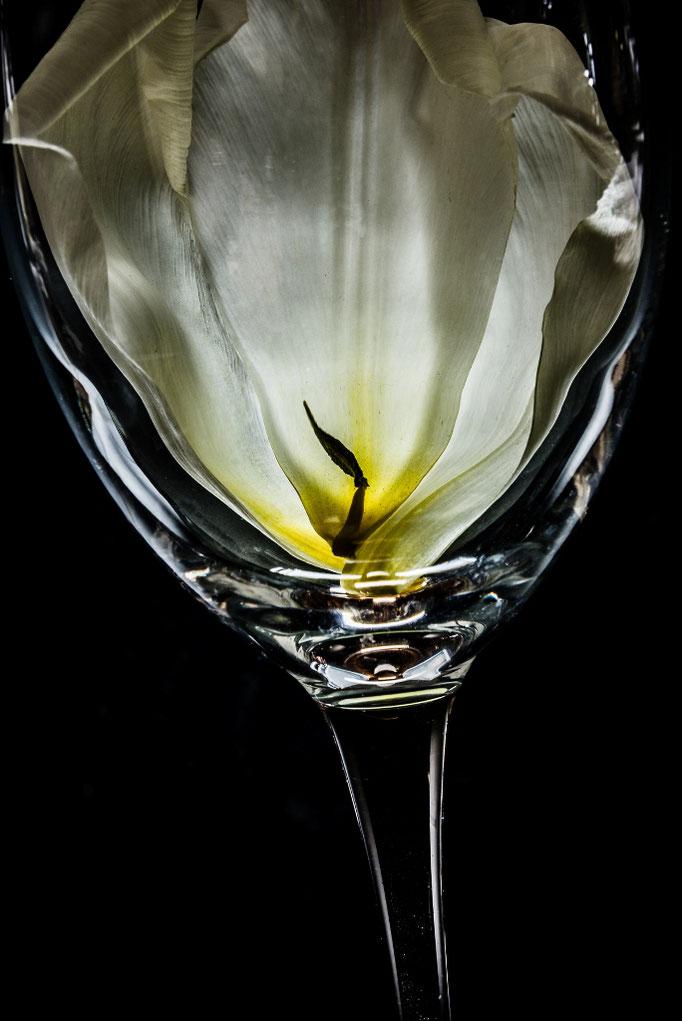 tulip -w