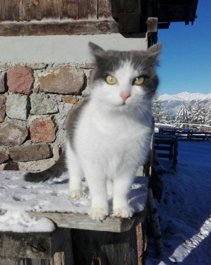 Südtirolerin kennenlernen