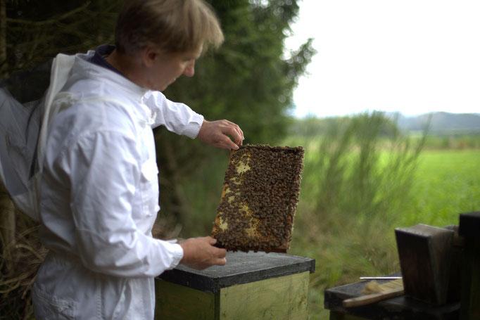 Honigexkursion auf Hof Köhne