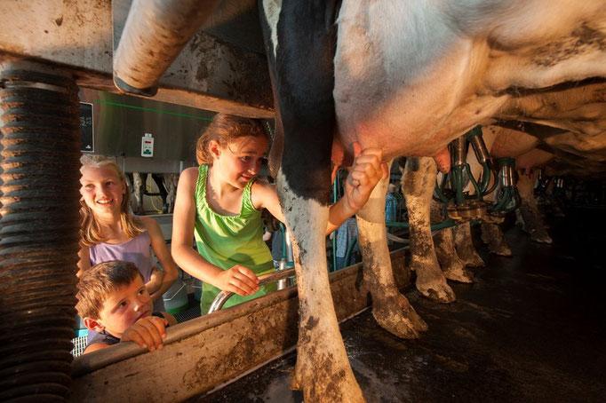 Helfen beim Melken bei Familie Köhne