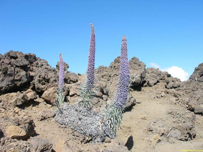 Pico de la Cruz 2351m