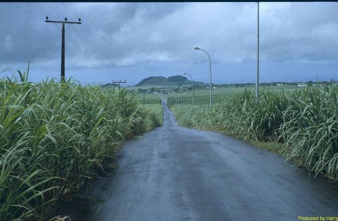 Fahrt durch Zuckerrohrfelder