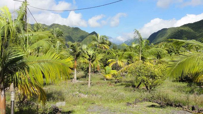 """unsere erste Unterkunft """"Le Saint Alexandre"""" im Oster der Insel auf ca.400m Meereshöhe"""