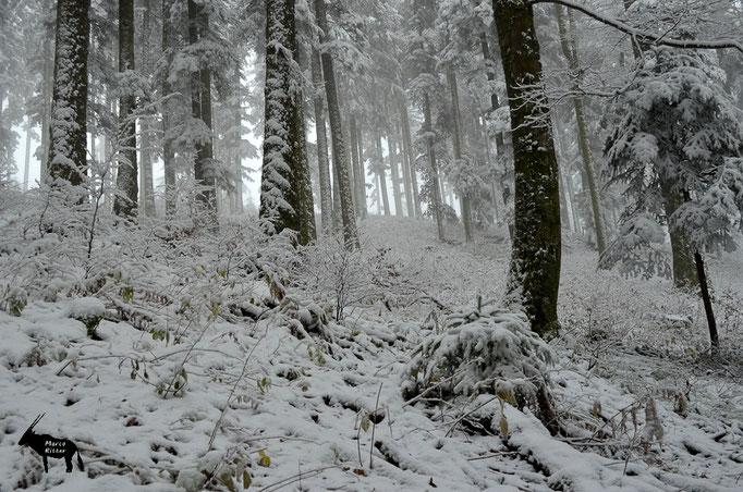Winterlicher Schwarzwald