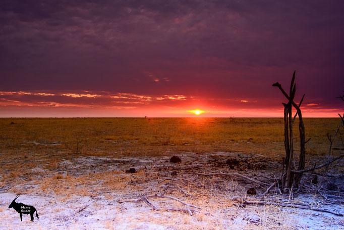 Königlicher Sonnenuntergang - King Nehale