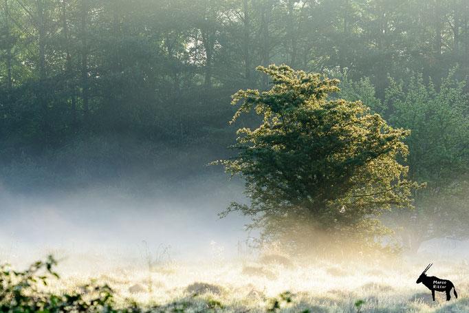 Morgennebel im Spessart