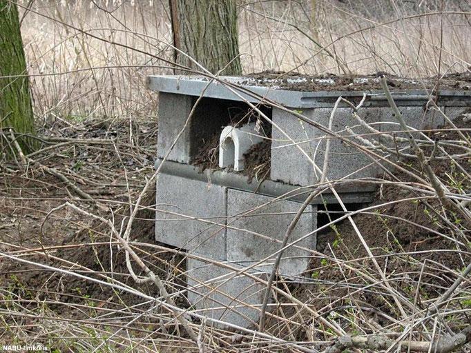 Für den seltenen Eisvogel wurde eine künstliche Steilwand mit Brutröhre errichtet.