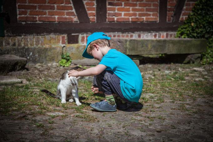Kind spielt mit Katze auf dem Imkershof der Familie Röhrs in Schneverdingen-Surbostel