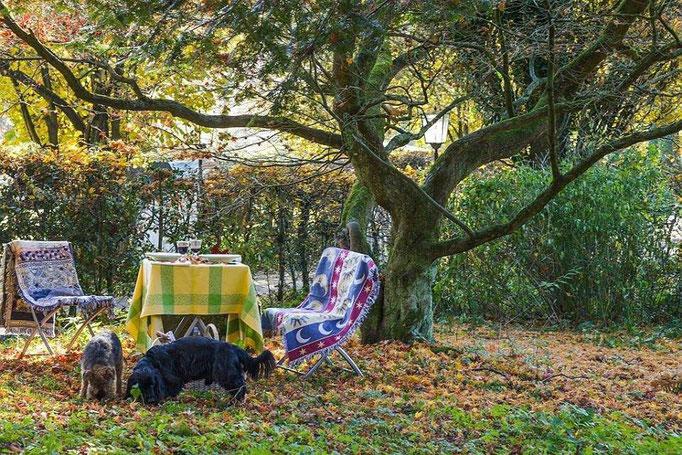 Herbstbild Ferienwohnungen Altes Forstamt im Teutoburger Wald