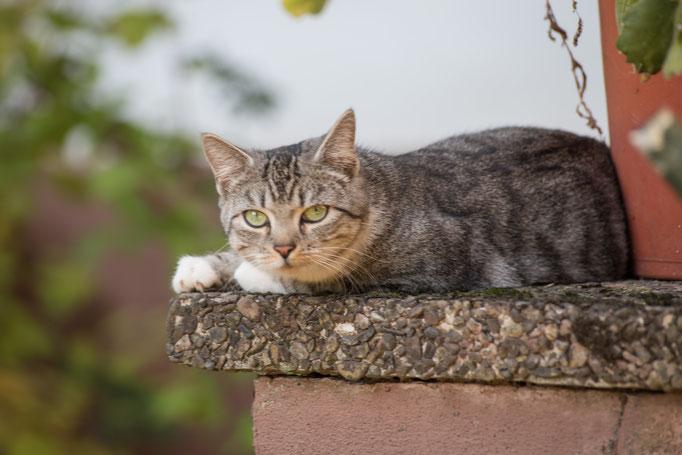 Katze Ferienwohnungen Altes Forstamt im Teutoburger Wald