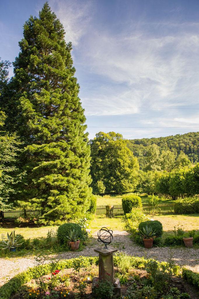 Mammutbaum Altes Forstamt
