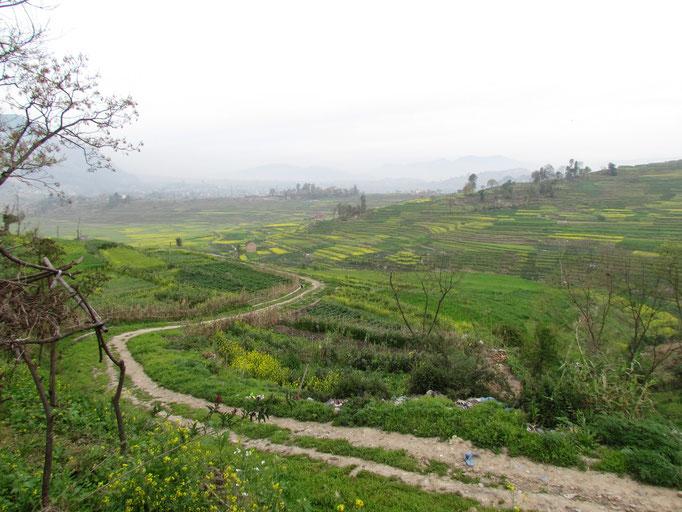 durch die Reisfelder