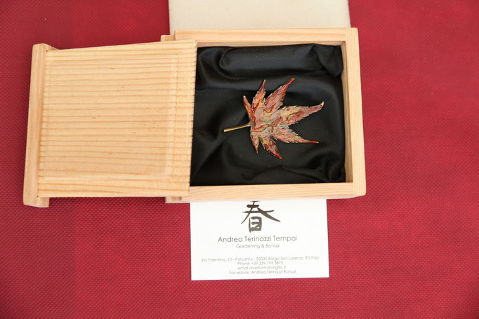 Premio Bonsai Club Amici del Verde