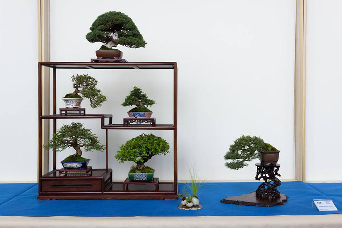 Composizione shohin - Studio Botanico