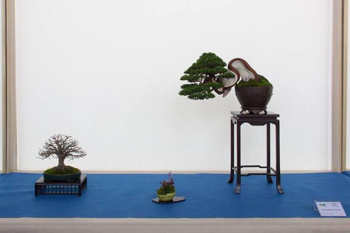 Composizione chuhin con juniperus chinensis - Jikan-en - 2° premio chuhin - Targa Presidente UBI