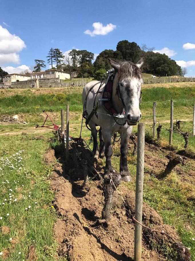 Vin Vino, Grands Vins Italiens de Barolo, Grands Crus Français, Wine Box, Bordeaux, Patrick Moulene