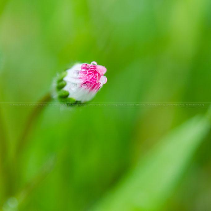 Fleurs Pierre Le Corre