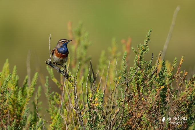 Gorge bleue©Alexandre Roubalay