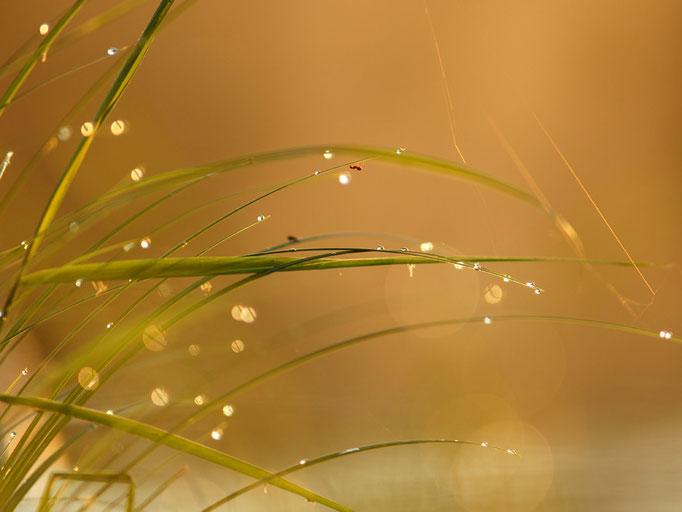 Herbre eau et fourmi - flore et photo nature en Sologne ©Alexandre Roubalay - Acadiau d'images