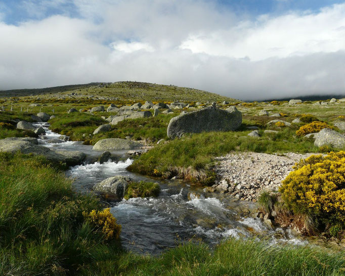 Un cours d'eau sur le Mont Lozère
