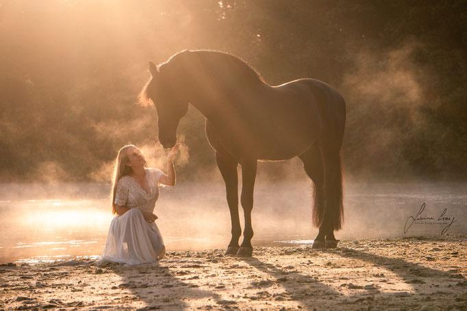 Pferd Nebel