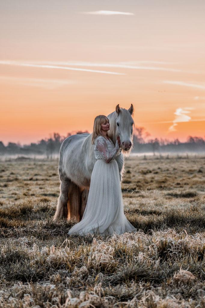 Pferdebild Sonnenaufgang