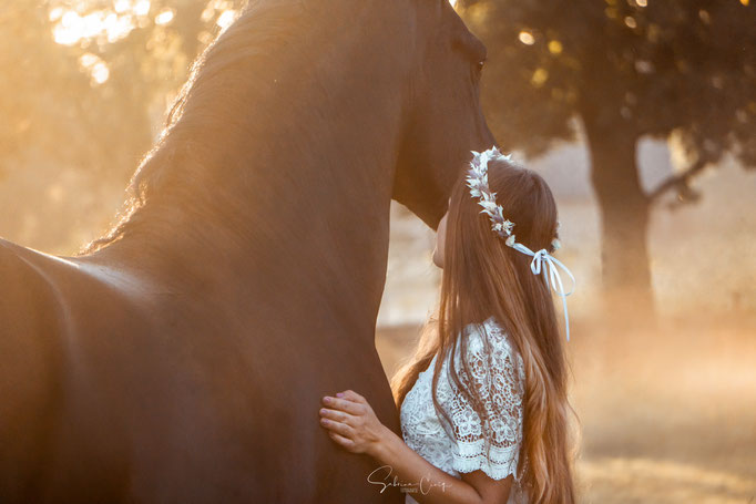 Pferdefotografie Sonnenaufgang