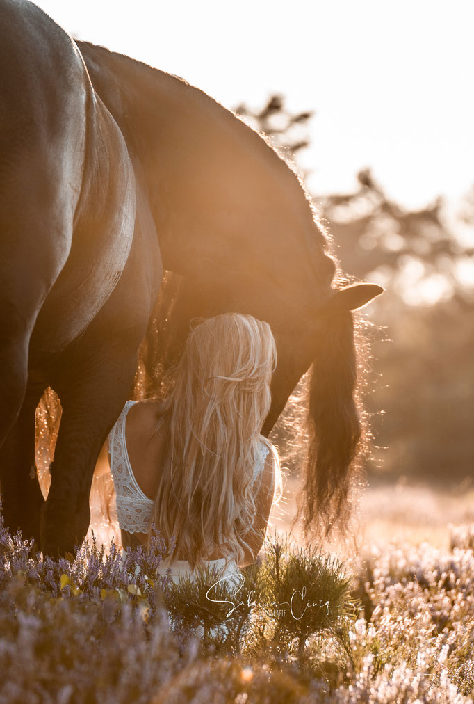 Pferd Heide