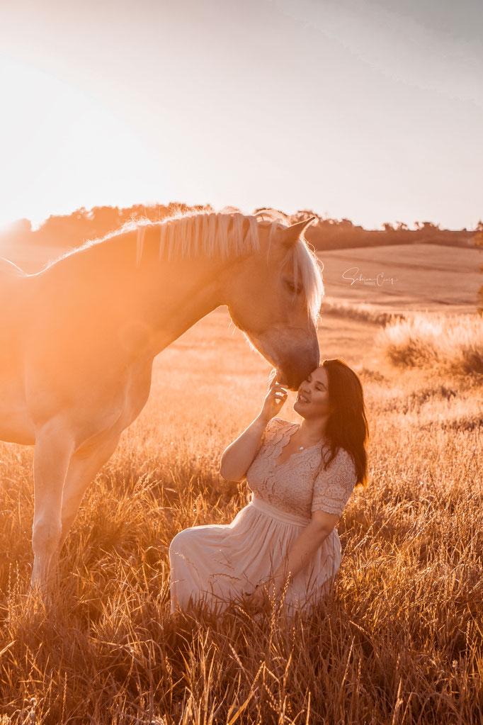 Haflinger Pferdefotografie