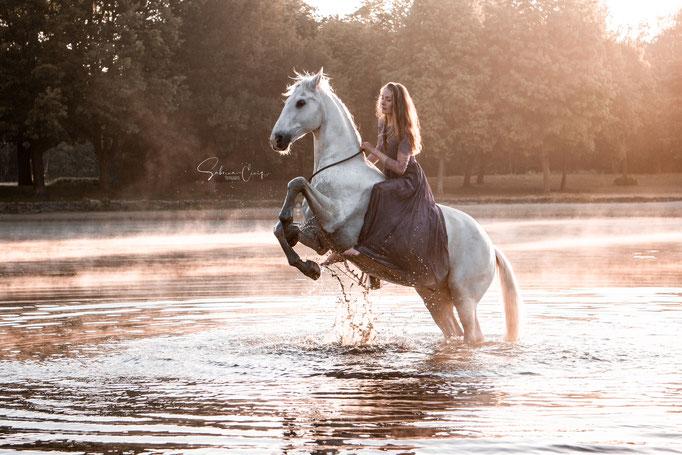 Steigens Pferd im Wasser