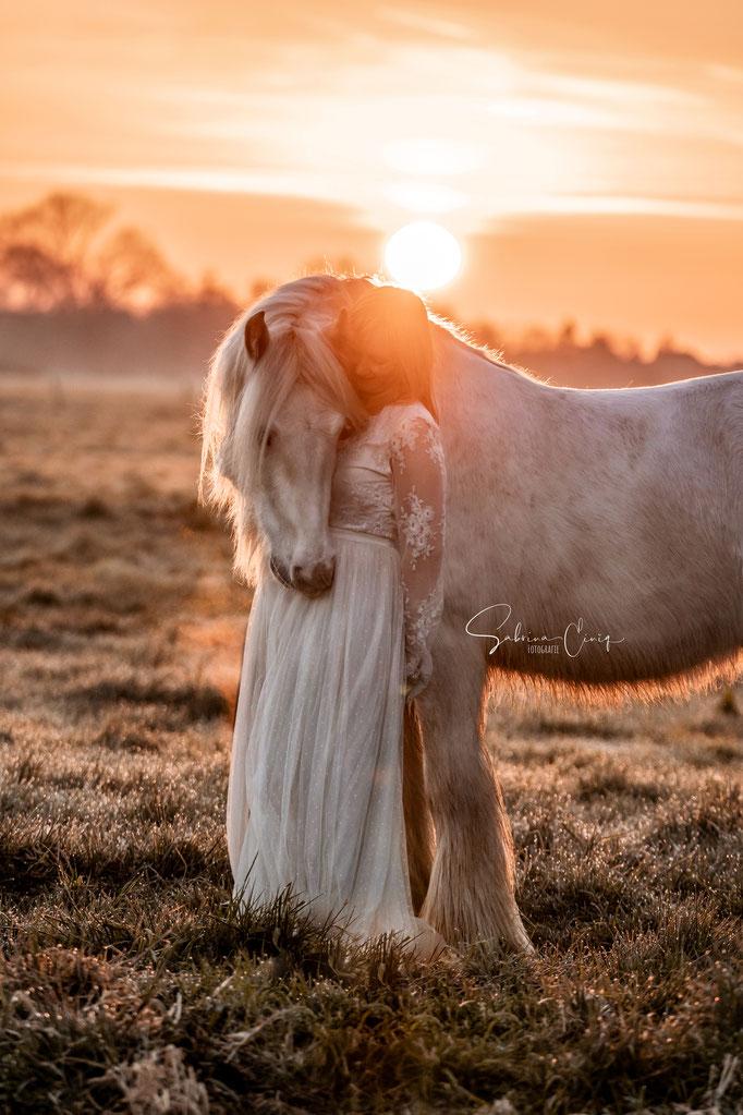 Sonnenaufgang Tinkerpferd