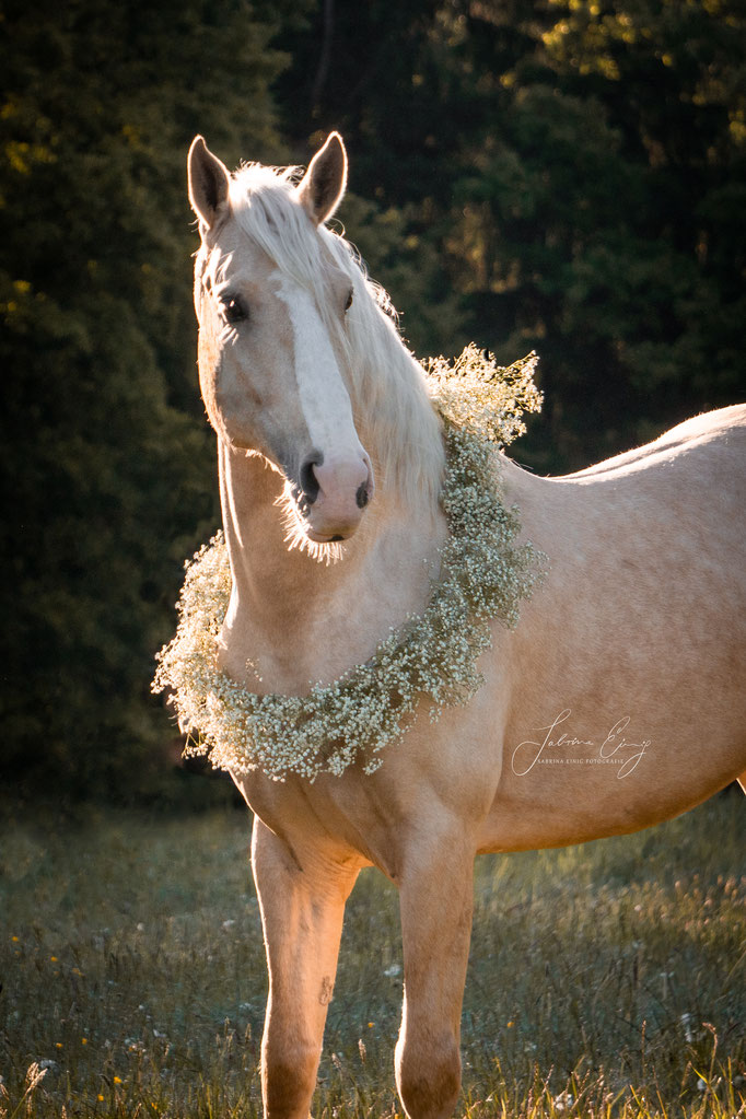 Spanisches Pferd