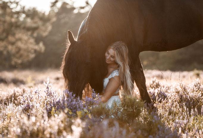 Schwarzes Pferd Heide