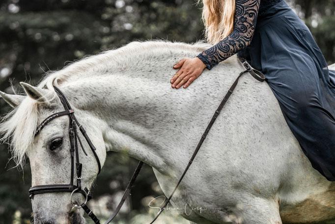 Pferd loben