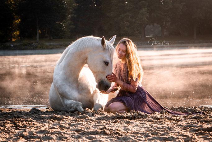 Pferd Ablegen