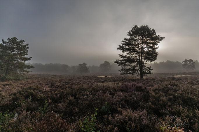 Mehlinger-Heide im Morgendunst
