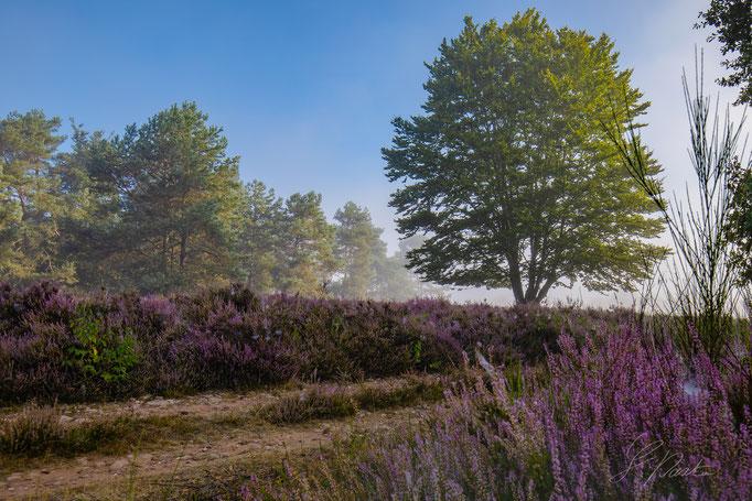 Mehlinger-Heide im Morgendunst bei Sonnenaufgang