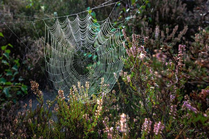 Mehlinger-Heide Spinnennetz