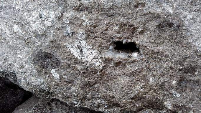 Céphalopode avec de la calcite...