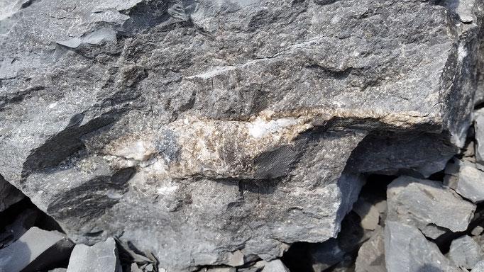 Céphalopodes avec calcite...