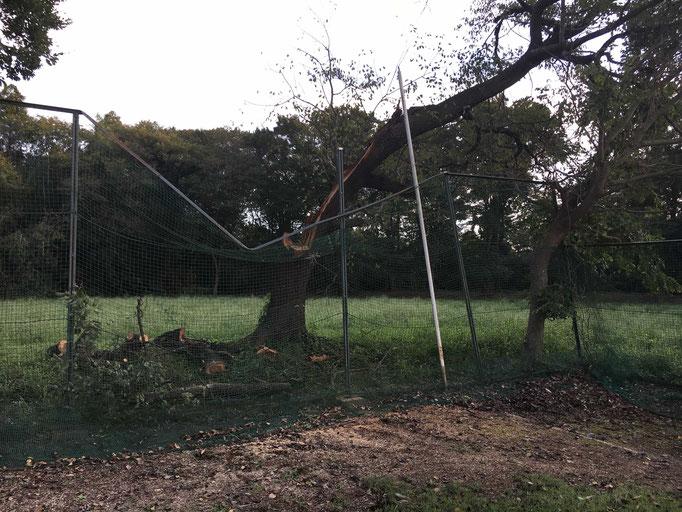 ライトフェンス、倒木により倒壊