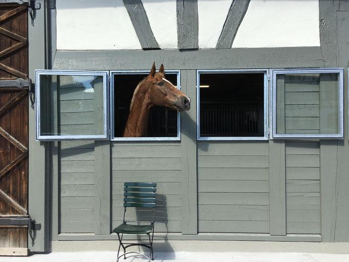 Erste Gäste in den neuen Pferdeboxen