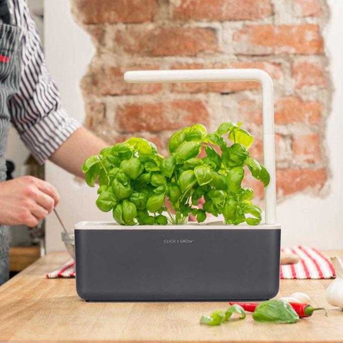 Indoor Garten in der Küche zum Growen