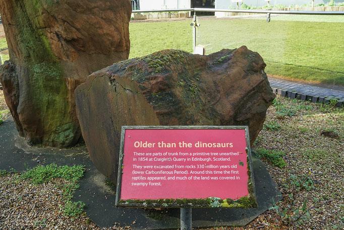 Älter als die Dinosaurier