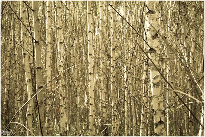 """""""Man sieht den Wald vor lauter Bäumen nicht"""""""