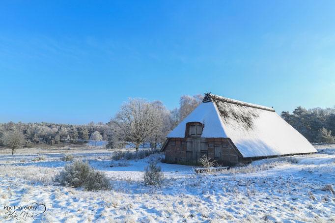 Winter in der Timmerloher Heide
