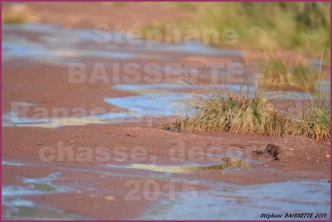 court d'eau proche du Salagou